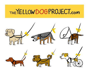 logo yellow dog project